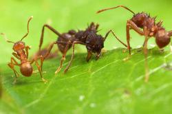 Ameisenspiel